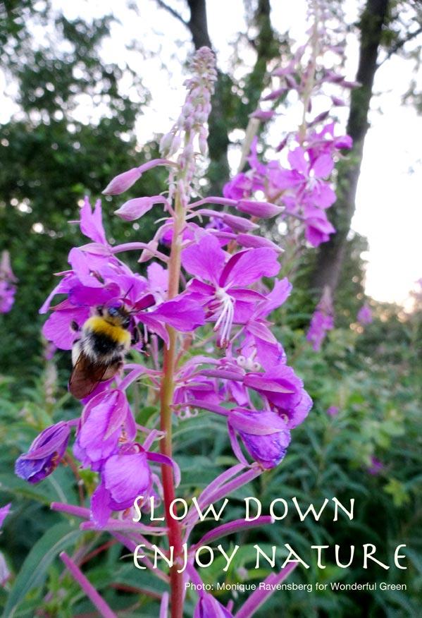 slowdown enjoy nature