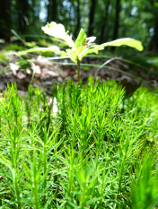 Wonderful Green nature