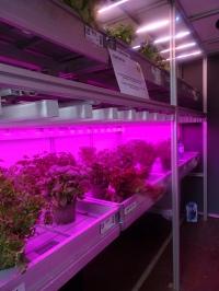high-tech-plantenteelt