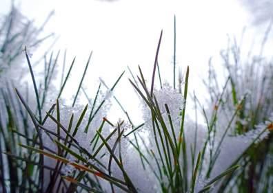 Nature wintertime