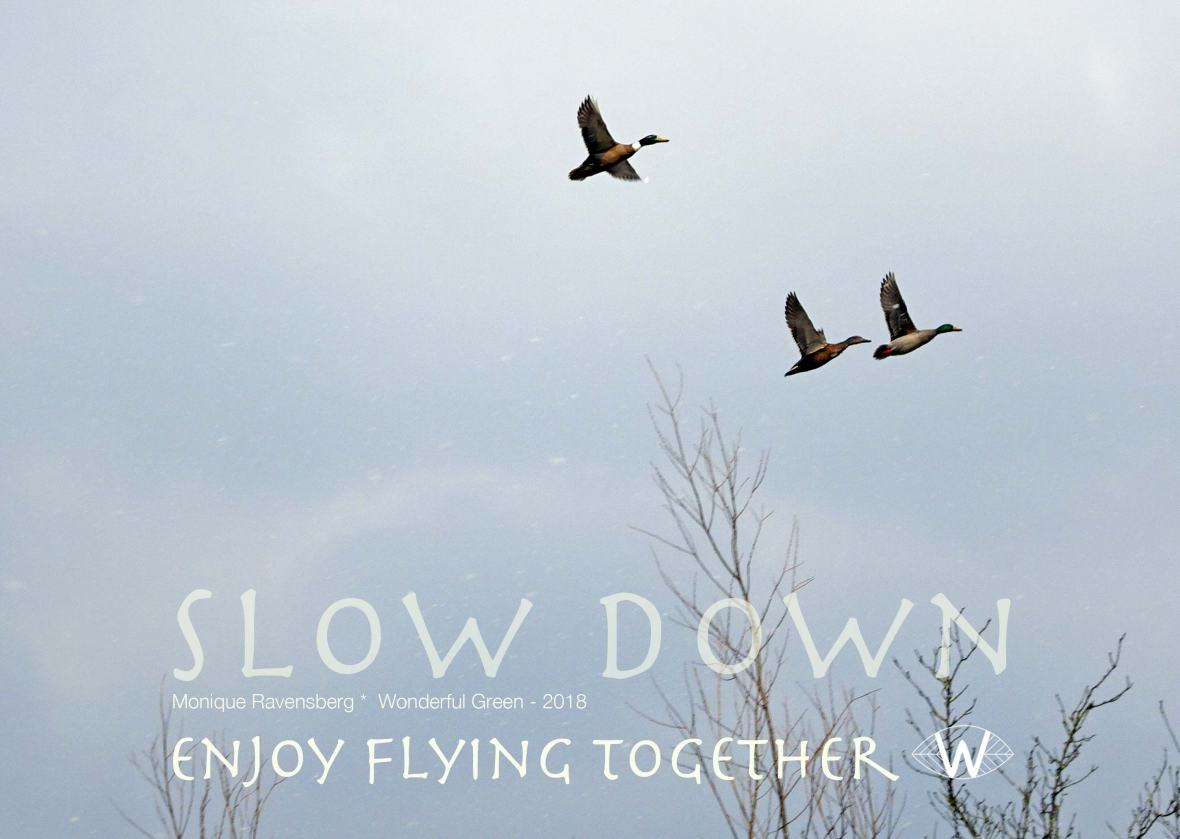 slow down campagne for wonderful green