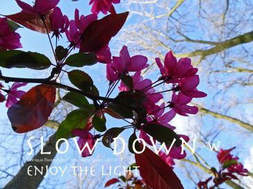 slow dawn campagne for #wonderfulgreen