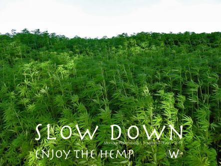 slow down campagne for #wonderfulgreen