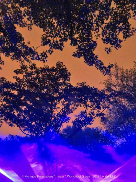 photo taken by Monique Ravensberg in the night of blue light and trees.