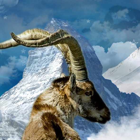 Ibex in high mountains - collage by MRSTAR