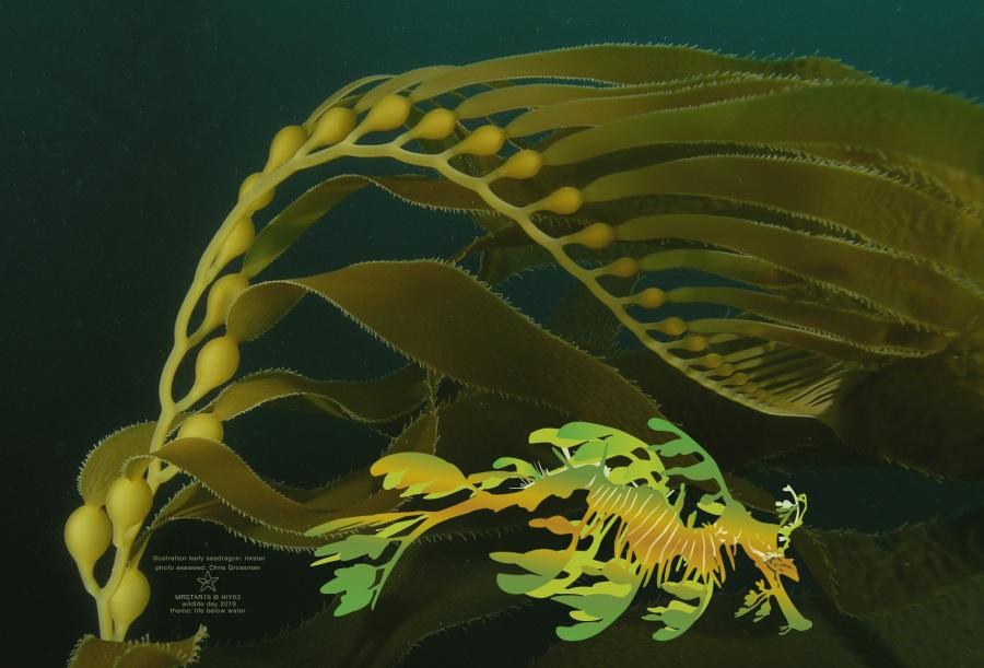 illustration of a leafy seadragon by mrstar.