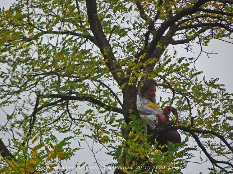 trees-bomen-natuur-291020-man-in-tree