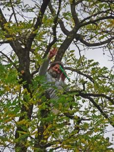 trees-bomen-natuur-291020-turi-vaccaro