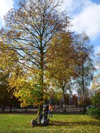 freedom-tour-Apeldoorn-31-10-20-tree