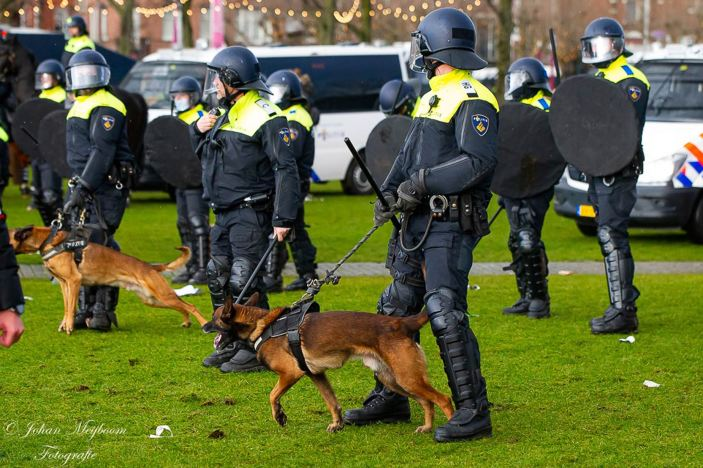 Johan-Meijboom-Amsterdam-17-01-21002-dogs