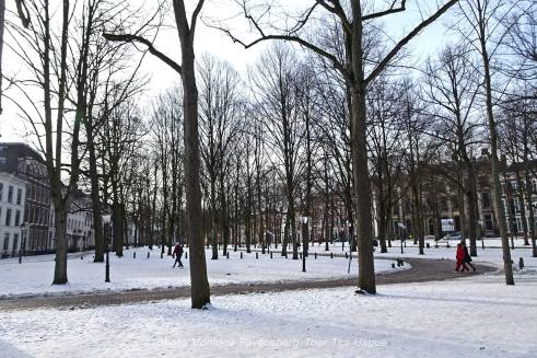 Freedom-Tour-the-Hague-trees