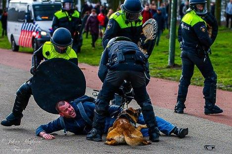Johan-Meijboom-hond-