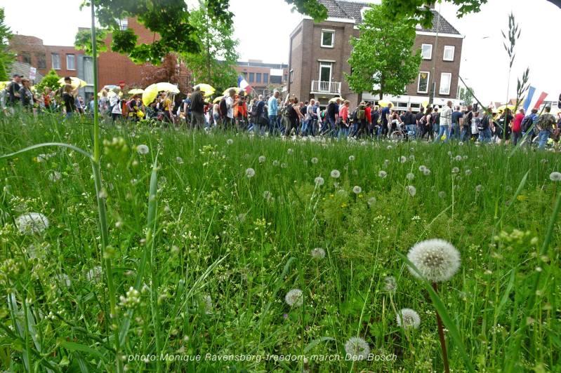 Freedom-210513-Den-Bosch-grass