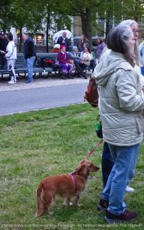 Freedom-210517-The-Hague-dog