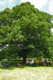 Freedom-210620-tree