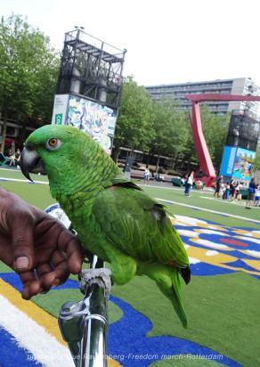 Freedom-210627-Rotterdam-bird